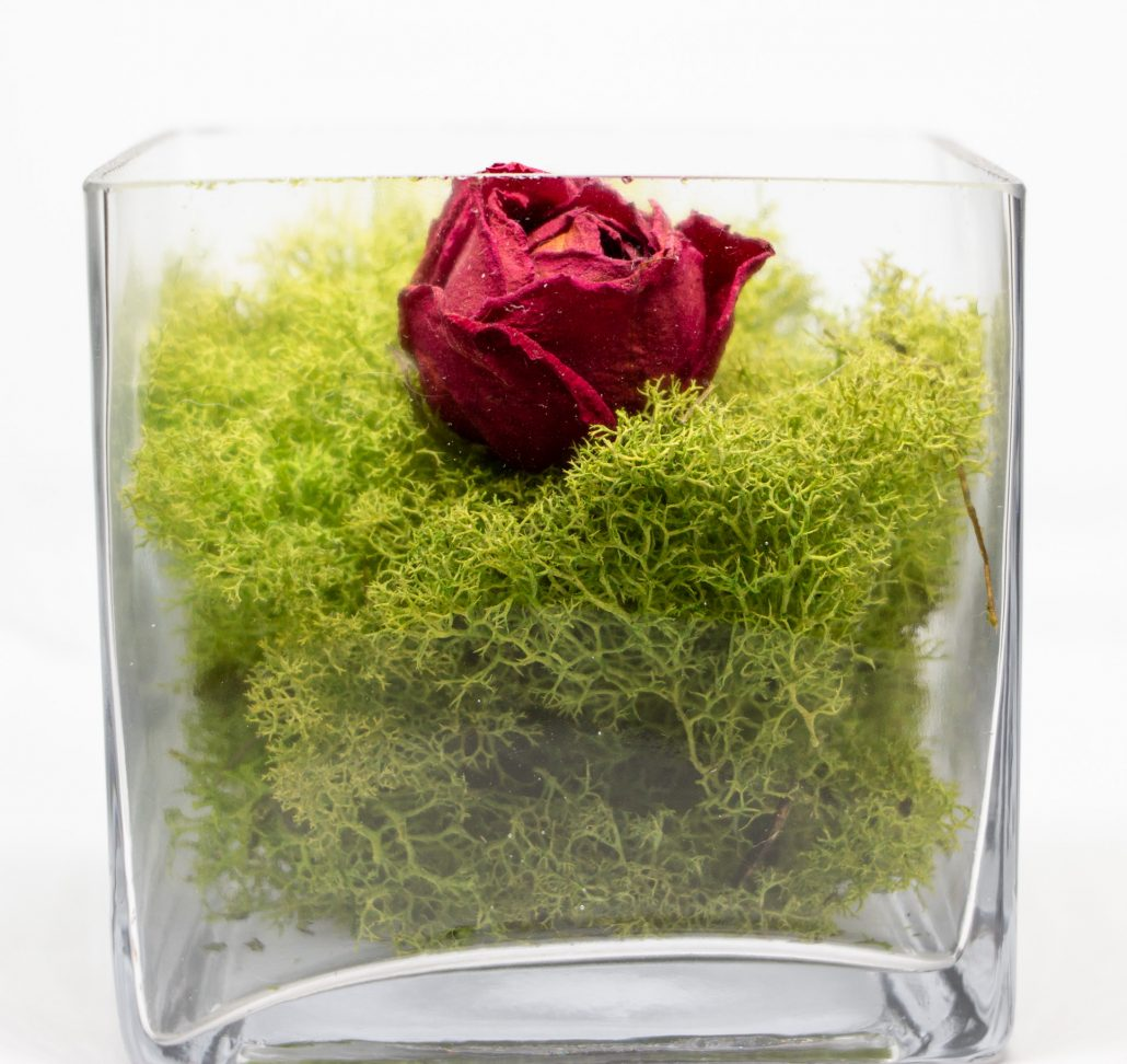Succulent Glass Box - The Fat Plant Society